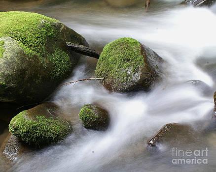 Mountain River by Susan Cliett