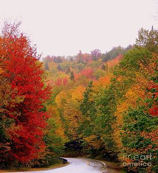 Mountain Road In Fall by Eunice Miller