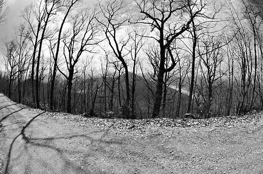 Mountain Road by Susan Leggett