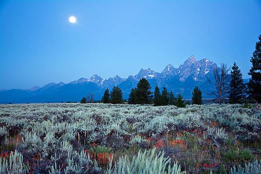 Randall Branham - Mountain Sage and Moon