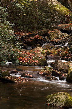 Mountain Stream by Cindy Rubin