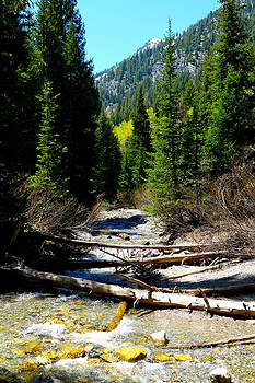Mountain Stream by Emmett Mavy