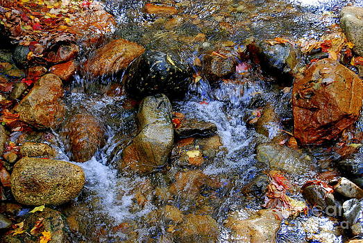 Mountain Stream In Autumn by Eunice Miller