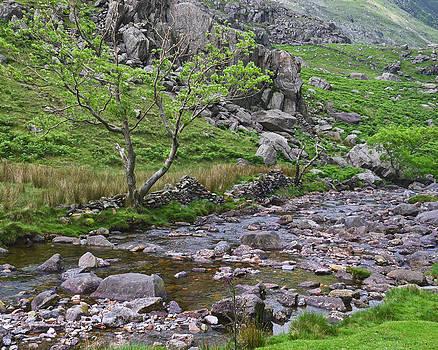 Mountain Stream by Jane McIlroy