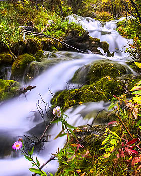 Mountain Stream by Jim Lucas