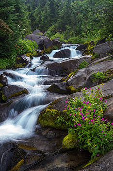 Mountain Stream by Mike  Walker