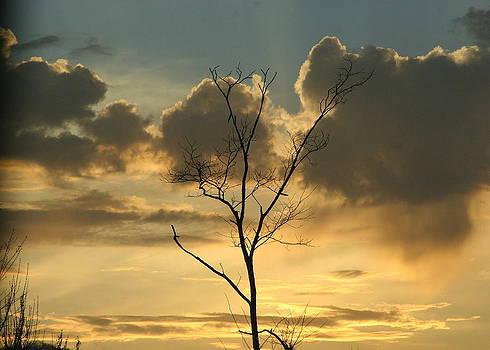 Mountain Sunset Four by Paula Tohline Calhoun