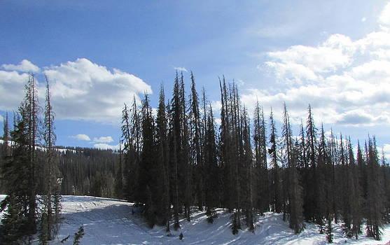 Colorado Mountain Top by Tambra Nicole Kendall