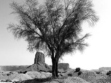 Mountain Top Tree by Heather Gordon