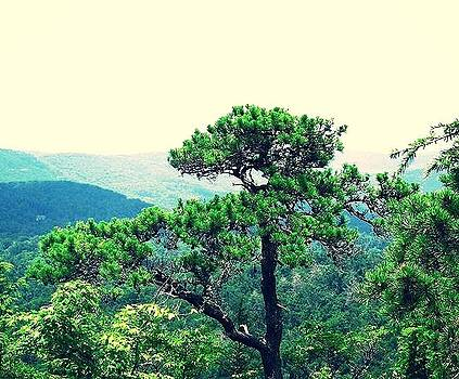 Mountain Top Tree Top by Allicat Photography