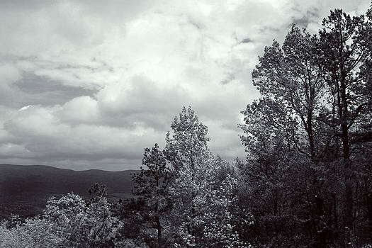 Nina Fosdick - Mountain Trees