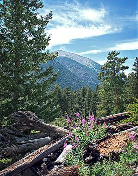 Julie Magers Soulen - Mountain View in Rocky Mountain National Park