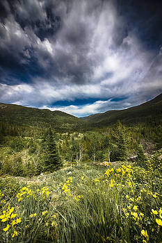 Mountain Wildflowers by Garett Gabriel
