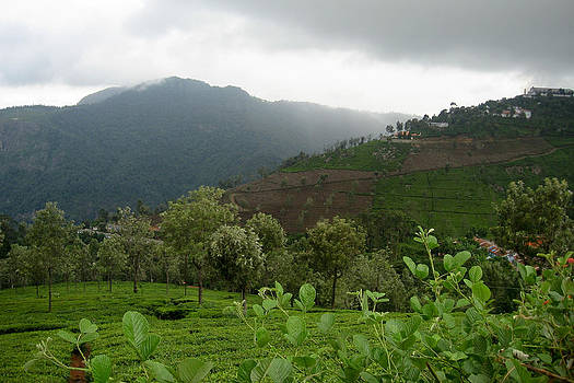 Pooja - Mountains and Tea Fields