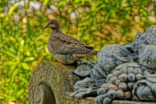Mourning Dove by Julie Grandfield