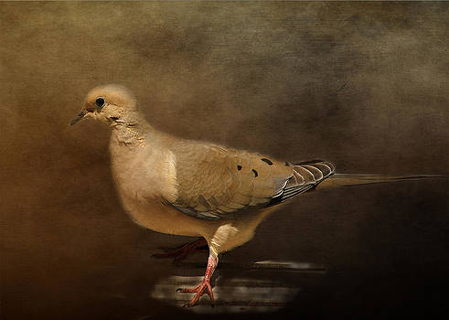 Mourning Dove by TnBackroadsPhotos