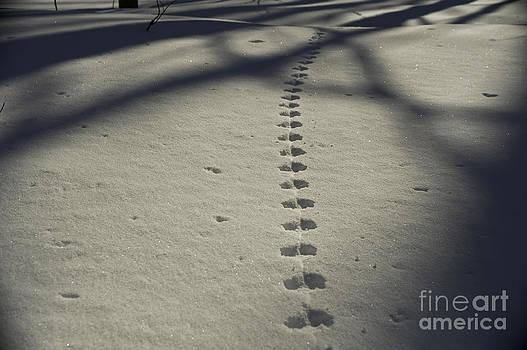 Elaine Mikkelstrup - Mouse Tracks