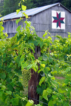 Moyer's Vines in color by Wayne Stacy