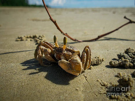 Mr. Crab 2 by Will Cardoso