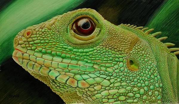Green Iguana  by Karen Sharp