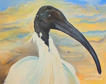 Mr Ibis by Una  Miller