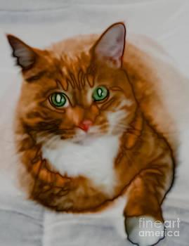 Kathi Shotwell - Mr. Orange