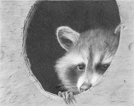 Mr. Racoon Is At Home by Sandra Weiner