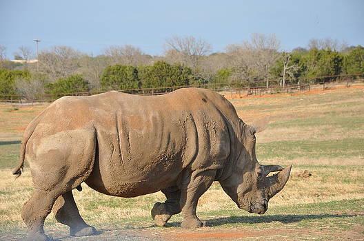 Mr. Rhino by Karma Gurung