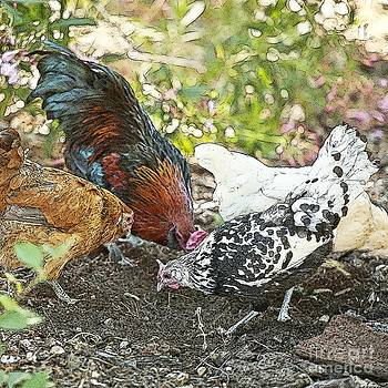 Artist and Photographer Laura Wrede - Mr. Rooster and All the Chickens Scratching for a Snack