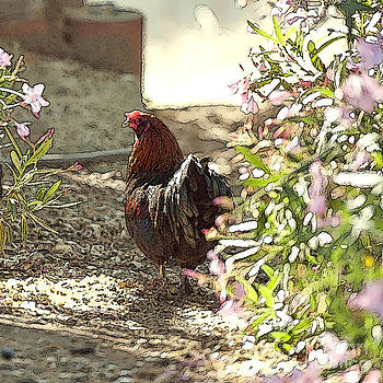 Artist and Photographer Laura Wrede - Mr. Rooster Takes a Stroll