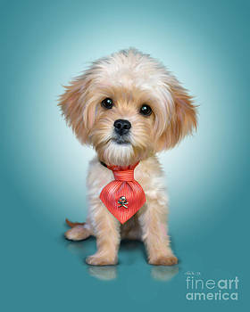 Mr. Toby Waffles the Cavapoo by Catia Lee