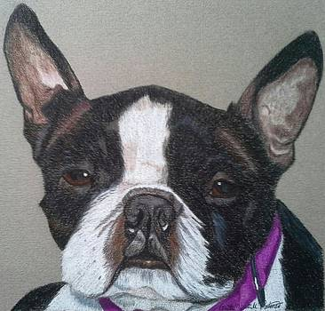Ms. Pugsley - Boston Terrier Commission by Anita Putman