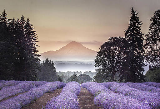 Mt. Hood and Lavender by Rod Stroh