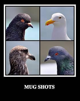 Mug Shots by AJ  Schibig
