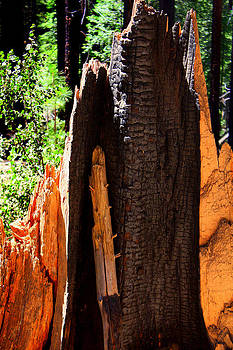 Anne Barkley - Muir Woods Redwood Fire Sculpture