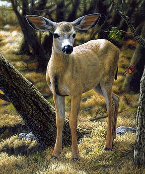 Crista Forest - Mule Deer Fawn - Monarch Moment