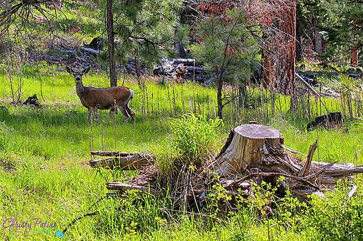 Mule Deer In Oregon by Christy Patino