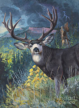 Mulie Storm by Rob Corsetti