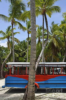 Multi-Colored truck and coconuts trees by Sami Sarkis