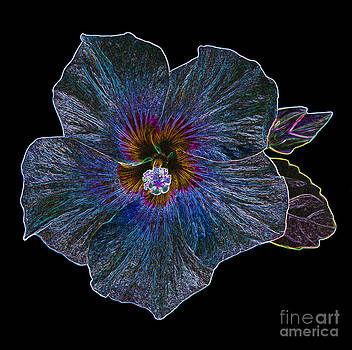 Multi-coloured hibiscus by Rosemary Calvert