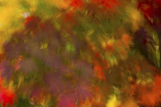 Minartesia - Multicolor