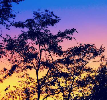 Multicolored Sunset by Candice Trimble
