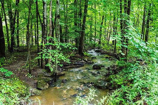 Murky Maine Stream by Jason Brow