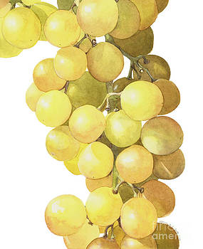 Muscat Grapes by Elizabeth Smith