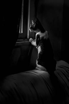 Mushi waiting for his companion by Alfredo Rougouski