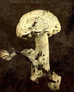 Mushroom by Amy Neal