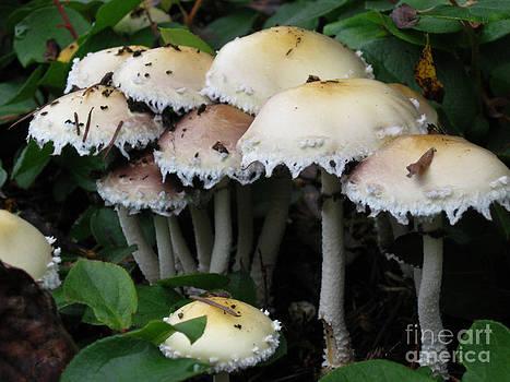 Ellen Miffitt - mushroom cluster
