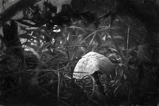 Mushroom by Daniel Martin
