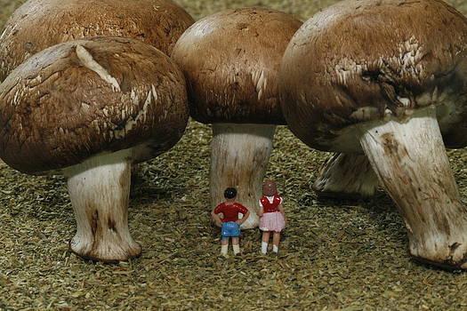 Mushroom Forest by Tony Sullivan