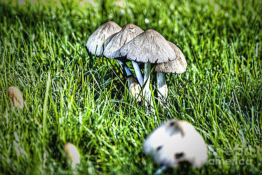 Mushroom in September HDR by Rich Collins